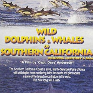 WILD DOLPHINS AND WHALES OF SOUT