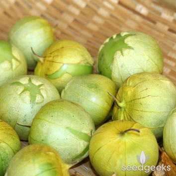 Tomatillo Verde Heirloom Seeds - Non-GMO, Open Pollinated, Untreated
