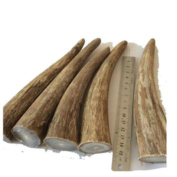 Natural African white yak buffalo Ox horn bone Engraving material Knife DIY material 11-20cm around