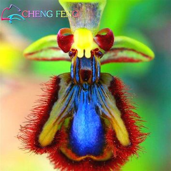 100pcs Orchid Seeds Rare and Beautiful Balcony Garden Bonsai Monkey face Butterfly Flower Seed Home Diy Plant Sementes for sale