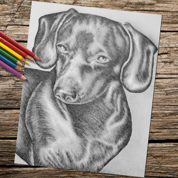 Dachshund dog coloring book page, adult coloring book, coloring page, adult coloring page, coloring book for adults, printable coloring page