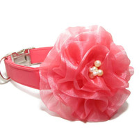 Designer Dog Collar - GUAVA SATIN dog collar and GUAVA flower - wedding dog collar, satin dog collar