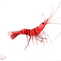 Red Shrimp, Original watercolor painting, 9 X 12 in, kitchen art, aquarium art