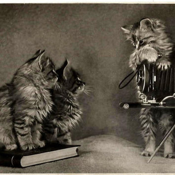 Kittens, camera and book - Russian Vintage Photo Postcard print 1955