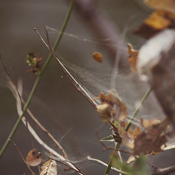 Fine Art Photography Home Decor Wall Art Print Nature Spiderweb and Autumn Leaves Macro Photography Landscape