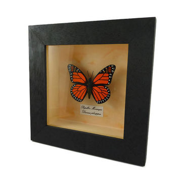 Orange black faux Monarch butterfly box frame, framed painted plastic butterfly (recycled CD/DVD), faux entomological frame, faux taxidermy