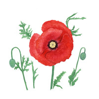 Red poppy artwork print