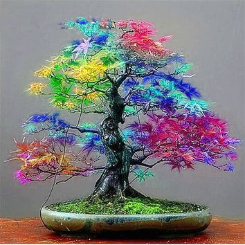 20 Seeds pack Japanese Red Maple Seeds Rare Rainbow Color * Very Beautiful Japan Plants New Seeds Garden Watch Bonsai Tree Gift