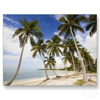 Beach at Punta Cana Post Card from Zazzle.com