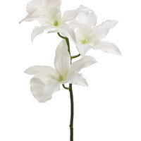 """Zygopetalum Orchid Spray in White - 16"""" Tall"""