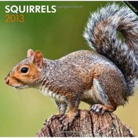 Squirrels 2013 Square 12X12 Wall Calendar (Multilingual Edition)