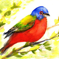 Colorful Bird, Painted Bunting, 5x7, 8x10 matted, Original Watercolor, Songbird, Avian, Wildlife, perched, male, backyard bird,tropical bird