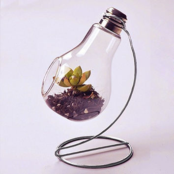 Clear Glass Bulb Vase Air Plant Terrarium