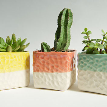Succulent Planters Set in Yellow Mint and Coral- Large- Handmade Ceramics by RossLab Indoor Succulent Gardening Summer Decor
