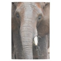 Elephant Kitchen Towels from Zazzle.com