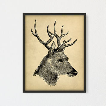 Vintage Deer Printable, Deer Head Print, Antique Deer Skull, Deer Horns, Deer Wall Art, Deer Poster, Antlers Printable Large Print