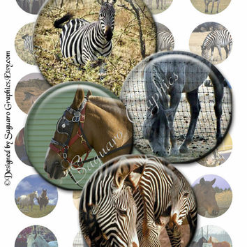 ZEBRAS & HORSES - 1.5 inch - SG51 - Printable Photos for Pendants, Bottle Caps, Cabochons, Magnets, Editable, Stickers, Arts and Crafts