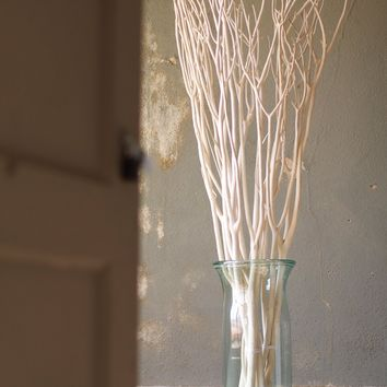 Bleached Willow Branches | Bundle of 18