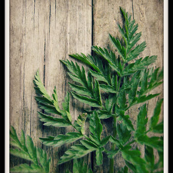 Woodland Photography, Rustic Photography, Rustic Home Decor, Fern Green, Brown, 8x10 Print, Nature