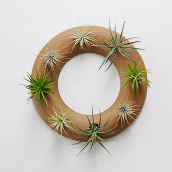 Wheel Thrown Ceramic Wreath Wall Planter in Hazelnut Brown.  Living Wreath for Air Plants.