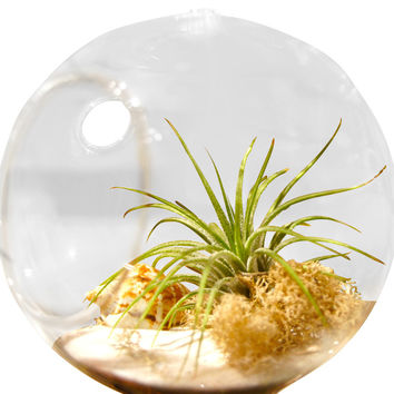 White Beach Terrarium