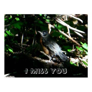 Young Robin I Miss You Postcard