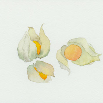 Cape Gooseberry painting. Fruit illustration. Kitchen decor. Physalis peruviana. Original watercolor painting.