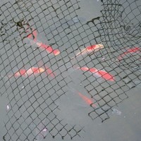 15 Feet x 12 Feet Pond Netting with Placement Stakes, Black