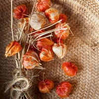 Chinese Lanterns Still Life Photograph, Rustic Fine Art Photography, Country Living Home Decor, Autumn Fall Orange Physalis Alkekengi, Seed