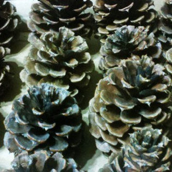 dried pinecone lot 13 cones from ancient fir tree by paperanji