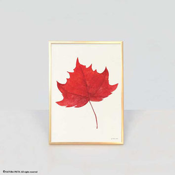 Maple leaf print-leaf print-watercolor red maple leaf print-fall print-autumn print-botanical print-home decor-autumn-NATURA PICTA-NPWP16