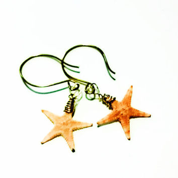 Tiny Real Starfish Earrings, Gold Filled, Seashell Jewelry, Beach Jewelry, Seashell Earrings, Beach Wedding, Starfish Jewelry, Ocean Jewelry