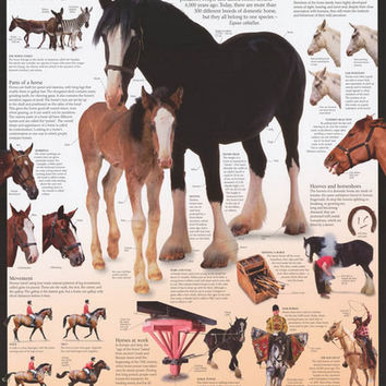 Horses Dorling Kindersley Infographic Poster 24x36