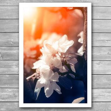 Blossom, Blossoming Apple, Spring Garden, Sun Beams, Nature Photo Art, Soft Colours Photography