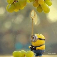 minion grapes - Google Search