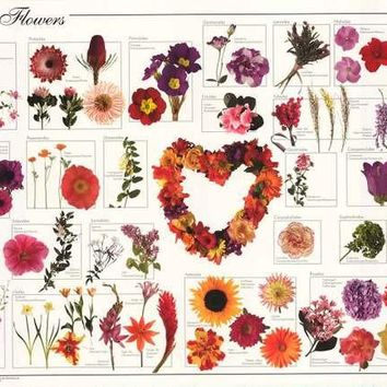 Garden Flowers Infographic Poster 24x36