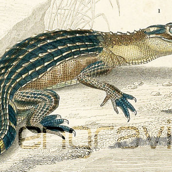 1861 Reptiles Alligator Antique Engraving Hand colored Original Antique Print Drawing Wall Art home decor Crocodilia Gecko