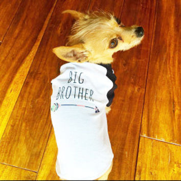 Dog Big Brother Shirt; Baby Announcement Dog Shirt; Puppy Tee; New Sibling Shirt; New Baby Announcement Tee; Big Brother Announcement Shirt