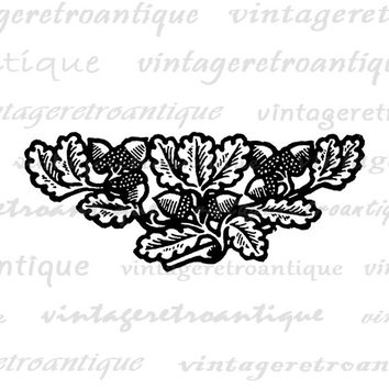 Digital Printable Acorn Embellishment Image Design Ornament Download Graphic Antique Clip Art Jpg Png Eps  HQ 300dpi No.4049
