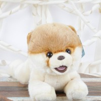 BOO – The World's Cutest Dog - Featured Looks