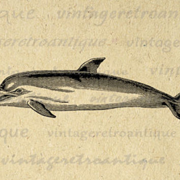 Printable Narwhal Whale Graphic Digital Download Illustration Image Vintage Clip Art Jpg Png Eps  HQ 300dpi No.2668