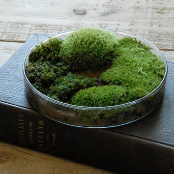 Moss Terrarium // Science Gift - Home Decor for Spring - Unique Mother's Day Gift
