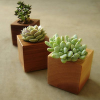 Cube Succulent Pots in Recycled Wood - Andrew's Reclaimed
