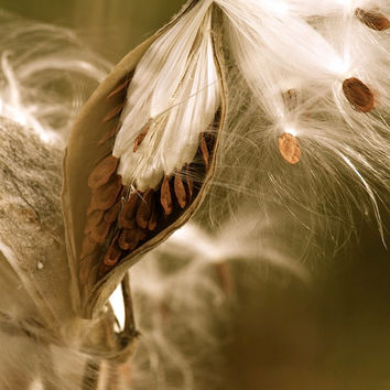 Vintage Style Photography, Seeds, Rustic Wall Decor, Fine Art Photo Print