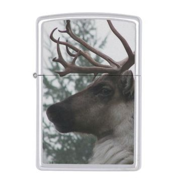 Antlered Caribou Photo Zippo Lighter