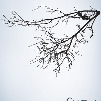 Vinyl Wall Decal Sticker Hanging Bare Tree Branches #763