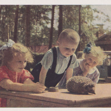 "Vintage Photo Postcard by A. Stanovoy ""Young Naturalists"" -- 1963"