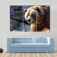 Big Grizzly Brown Bear Looking At Camera Canvas