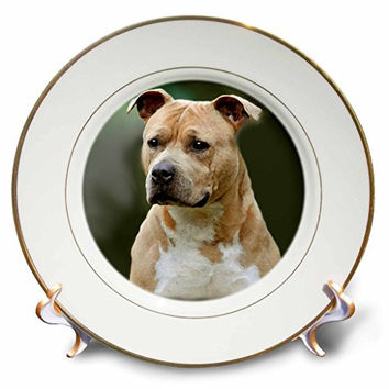 3dRose cp_4253_1 American Staffordshire Terrier Porcelain Plate, 8-Inch
