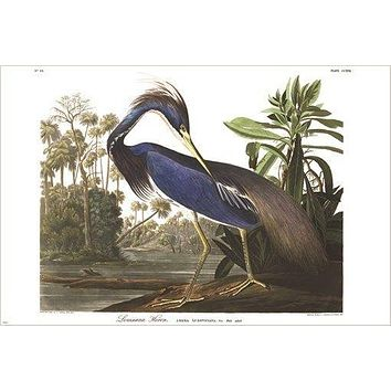 LOUISIANA HERON fine art bird poster DETAILED COLORFUL one-of-a-kind 24X36
